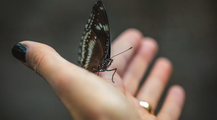 Angéline et ses ailes de papillon